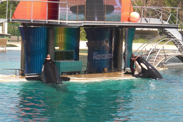 rencontre vip marineland Stains